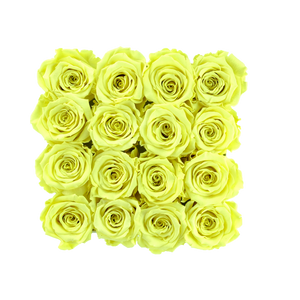 Light Yellow Preserved Roses | Square White Huggy Rose Box - The Only Roses