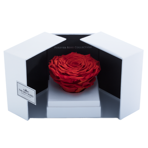 Orange Mega Preserved Rose | Swing Opening Box - The Only Roses