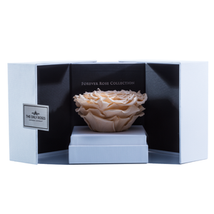 Peach Mega Preserved Rose | Swing Opening Box - The Only Roses