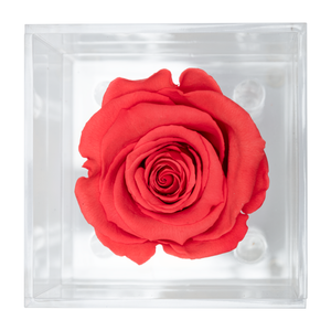 Bright Red Preserved Rose | Petite Acrylic Rose Box - The Only Roses