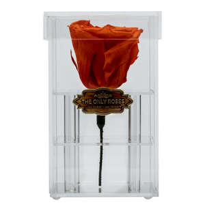 Dark Yellow Red Preserved Rose | Petite Acrylic Rose Box - The Only Roses