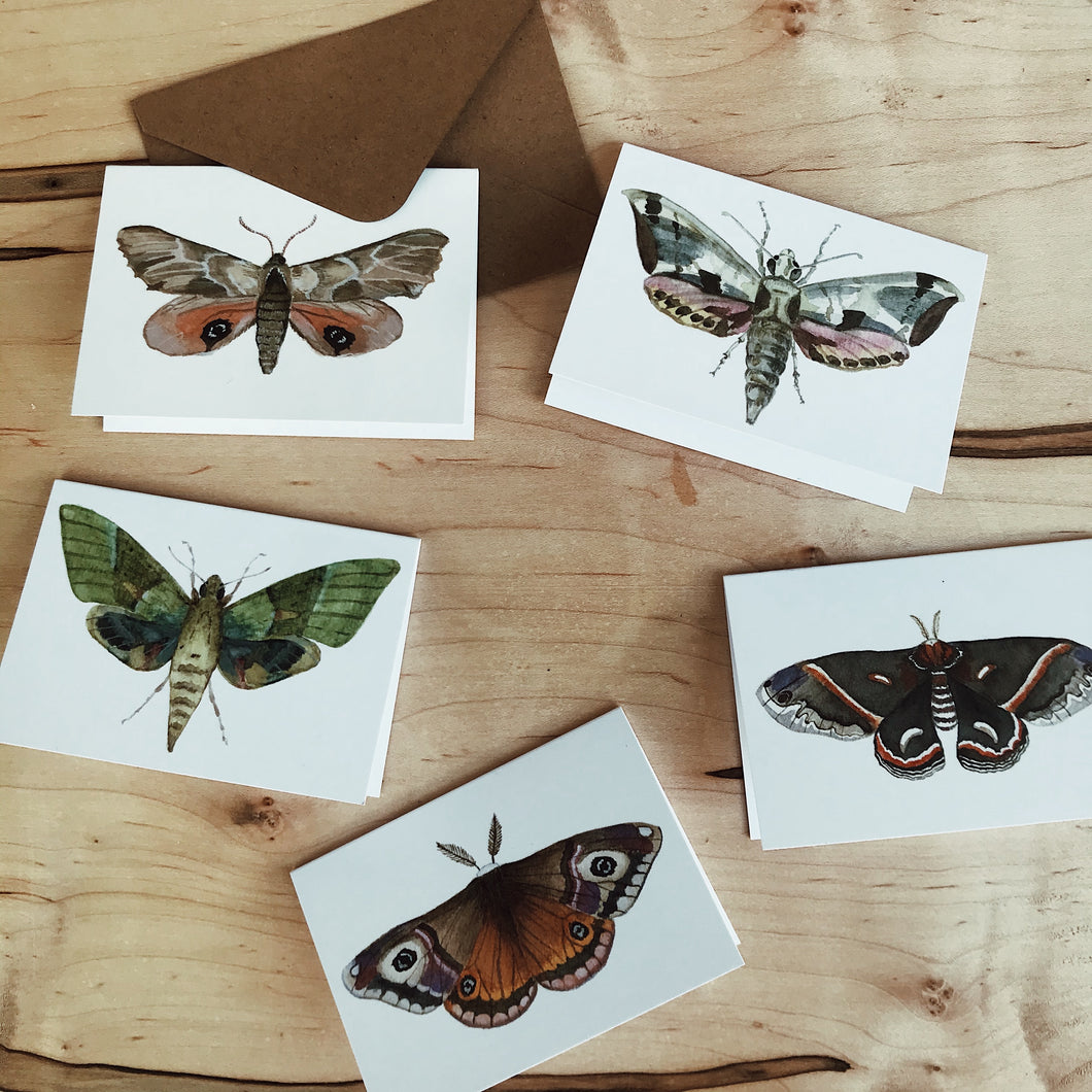 Set of Mini Moth Cards