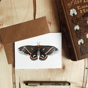 Set of Moth Cards