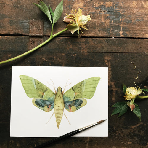 Original Watercolor Print Moth No.3