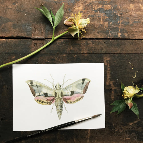 Original Watercolor Print Moth No.4