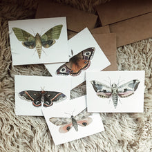 Load image into Gallery viewer, Set of Moth Cards