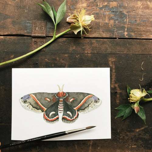 Original Watercolor Print Moth No.2