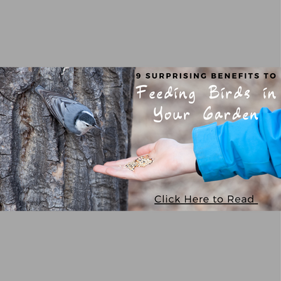 9 SURPRISING BENEFITS OF FEEDING BIRDS IN YOUR GARDEN!