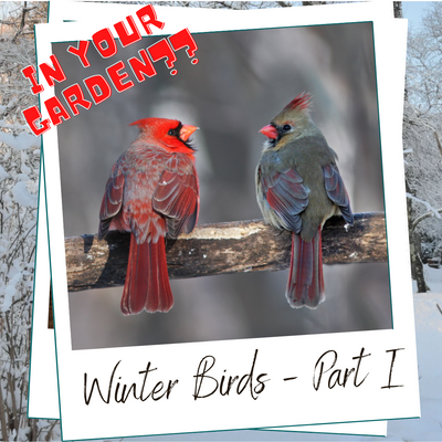 WHICH BIRDS WILL BE VISITING YOU THIS WINTER?