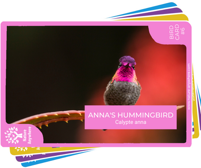 BIRD CARD: ANNA'S HUMMINGBIRD