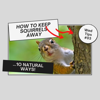 10  NATURAL TIPS TO KEEP SQUIRRELS AWAY FROM YOUR BIRD FEEDER