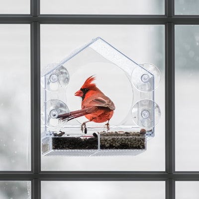BIRD FEEDING 101: HOW TO CHOOSE THE RIGHT FEEDER FOR YOUR HOME!