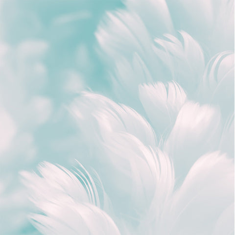 Abstract image of feathers on blue background