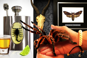 Insects & Taxidermy