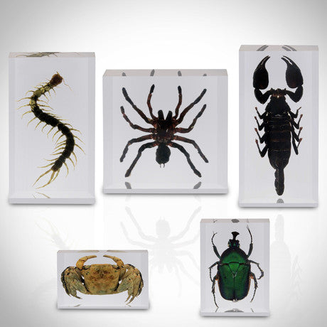 5 ARTHROPOD SPECIES COLLECTION IN RESIN CUSTOM DISPLAYS