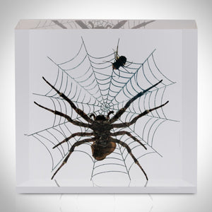 Authentic 'Spider + Fly' Resin Paperweight/Display