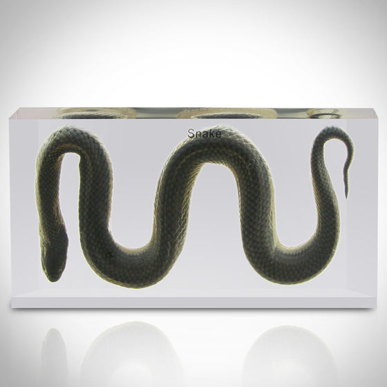 Authentic 'WATER SNAKE' Resin Paperweight/Display