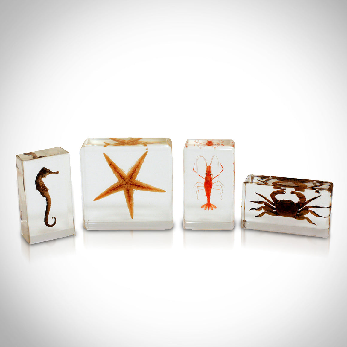 4 SEA LIFE SPECIES IN CUSTOM RESIN DISPLAYS
