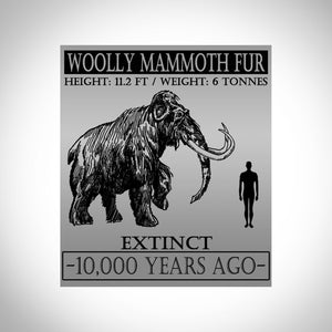 Woolly Mammoth Hair - Authentic Woolly Mammoth Hair Custom Museum Display