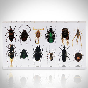 Authentic 12 Insect Specimens/ Resin Display