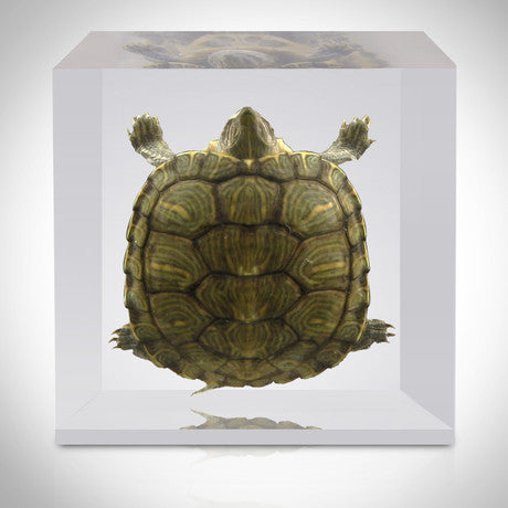 Authentic 'Turtle' Custom Resin Display / Paperweight