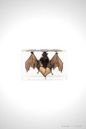 Authentic 'BAT' Resin Paperweight/Display