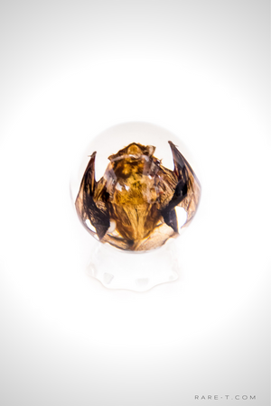Authentic 'BAT SPHERE' Resin Paperweight/Display