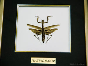 RARE-T Exclusive | LARGE PRAYING MANTIS Custom Table/Wall Frame