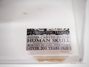 RARE-T Exclusive 'AUTHENTIC HUMAN SKULL HEADHUNTING TROPHY' Museum Display