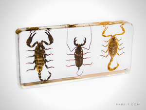 Authentic '3 SCORPION-PALAMNAERSUS SET' Resin Paperweight/Display