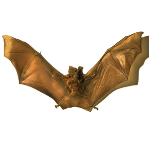 Rare-T Exclusive 'Authentic Rhinolophus Luctus Bat' Custom Frame