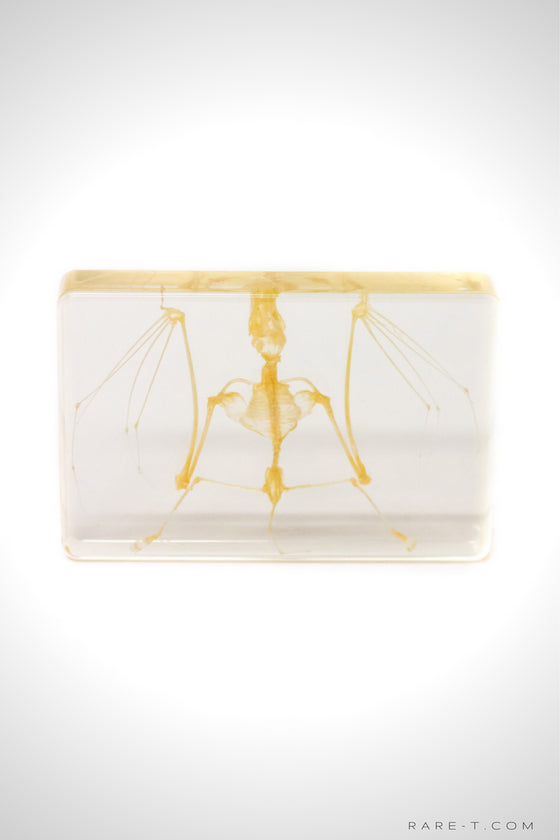 Authentic 'BAT SKELETON' Resin Paperweight/Display | RARE-T