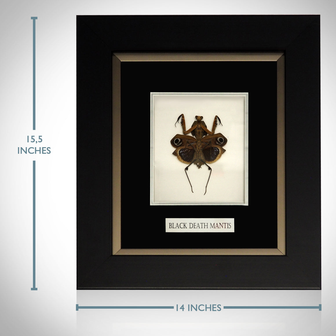 RARE-T Exclusive 'AUTHENTIC BLACK DEATH MANTIS' Custom SHADOW BOX Frame