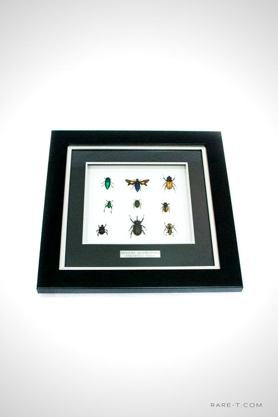 RARE-T Exclusive This VIP frame showcases the PHYLUM: ARTHROPODA-COLEOPTERA ORDER insect family