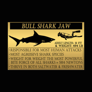Authentic Huge Bull Shark Jaw Rare-T Exclusive Museum Display