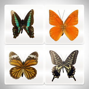 BUTTERFLY- Authentic 4 BUTTERFLIES Resin Paperweight & Coasters