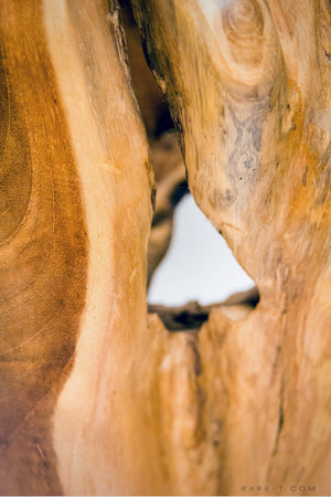 RARE-T | Hand-Sculpted 'RECLAIMED TEAK ROOT' Folk-Art Vase close up