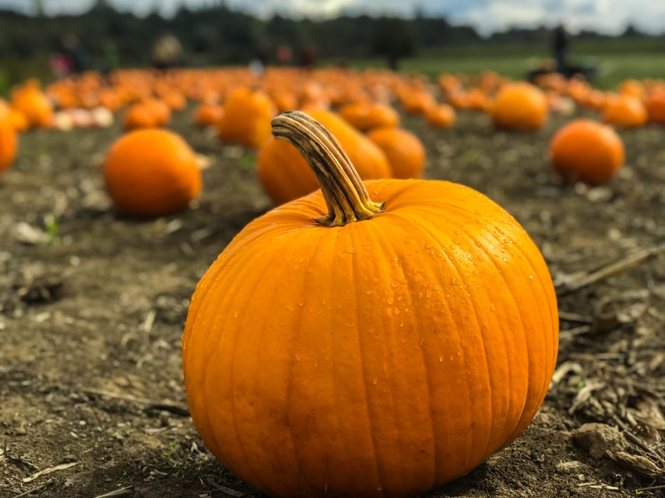 Is Pumpkin Keto Friendly?