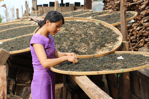 Pu-erh tea sun-drying