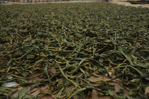 processed tea leaves