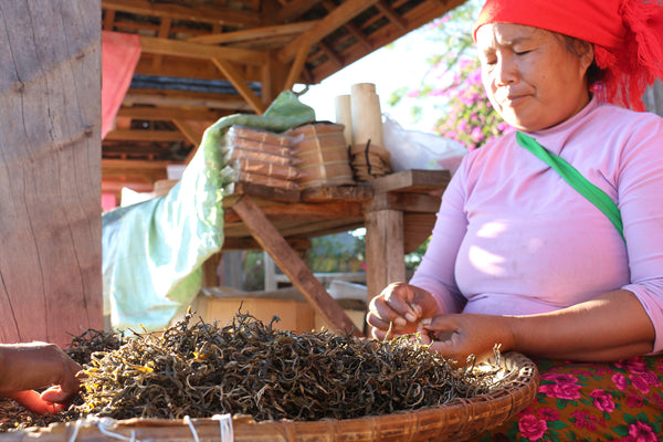 Dai lady sorting the yellow flakes out of maocha pu-erh tea