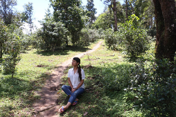 meditation in the tea gardens