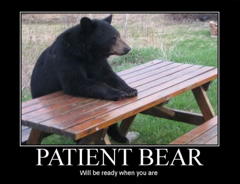 be patient like a bear