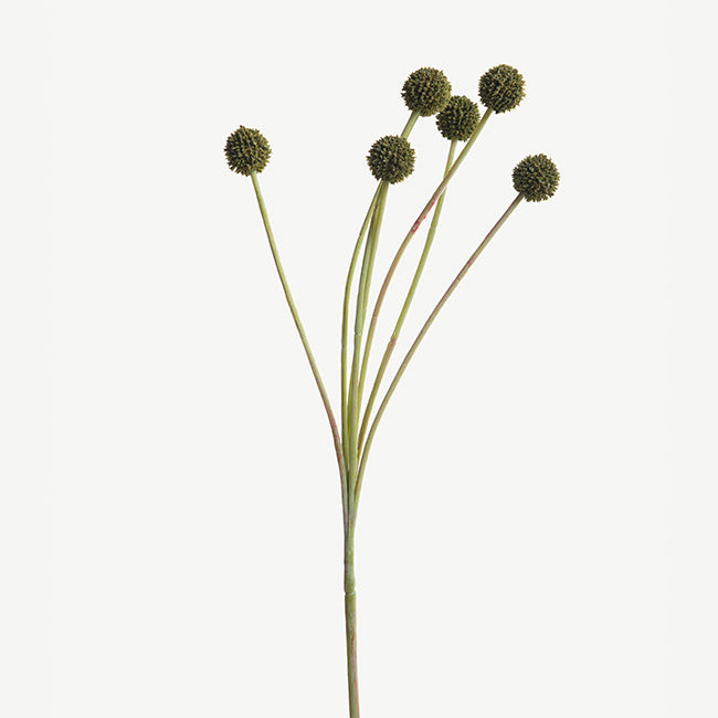 Green Allium
