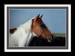 "Horse Wall Art, framed and double matted print, 16"" x 10 5/8"" (41cm x 27 cm)"