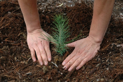 4 Things To Consider When Planting a Tree