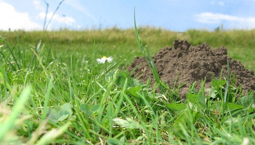 Tips For Keeping Moles Out of The Garden