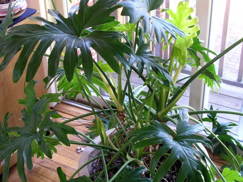 Is Poor Air Quality Harming Your Houseplants?