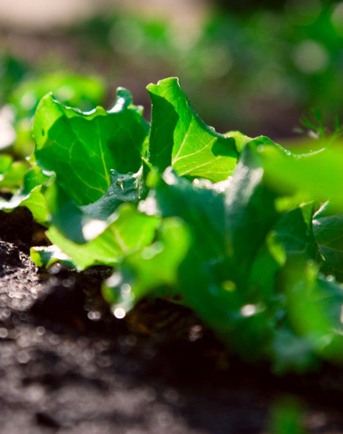 How To Improve Your Soil Health