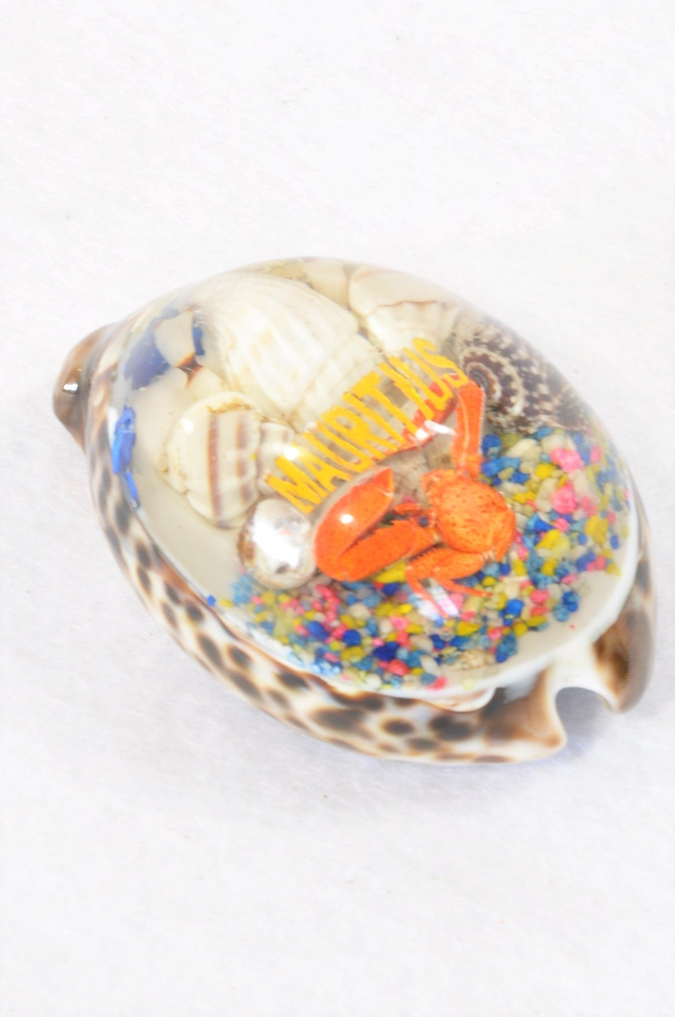 Unbranded Pretty Mauritius Shell Decor Unisex All Ages